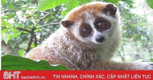 Hà Tĩnh ưu tiên bảo tồn nhiều loài động vật quý hiếm, nguy cơ tuyệt chủng