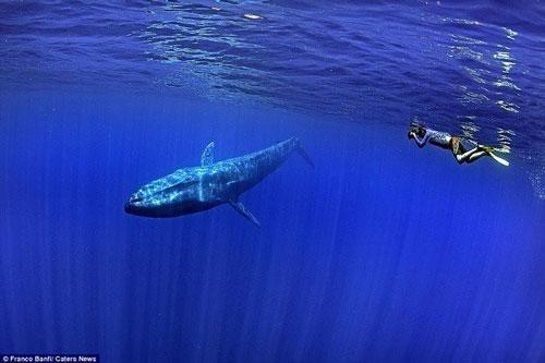 Chân dung loài cá voi lớn nhất hành tinh ngay trước mắt