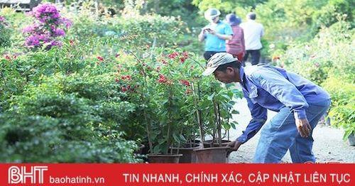 Các nhà vườn cây cảnh ở Hà Tĩnh sớm 'chạy' hàng đón tết