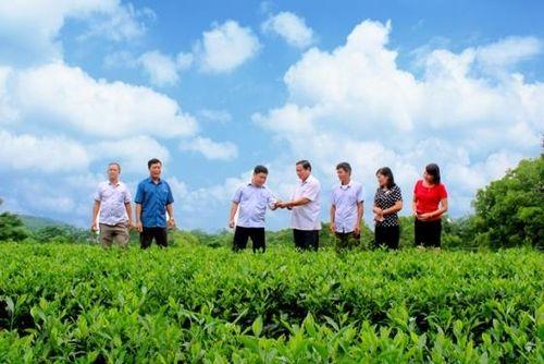 Lễ hội vinh danh các Làng nghề chè huyện Phú Lương