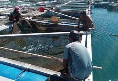 Thực hư thông tin cá mập xuất hiện tại vùng biển Vĩnh Tân