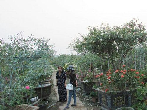 Nụ cười người trồng hoa Mê Linh