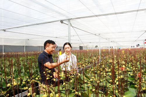 Thúc đẩy phát triển kinh tế trang trại