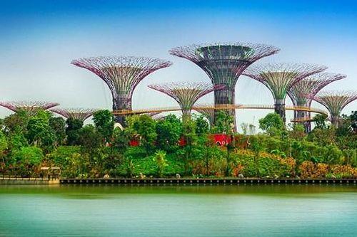 'Mái nhà xanh di động' giúp cải thiện chất lượng không khí đô thị