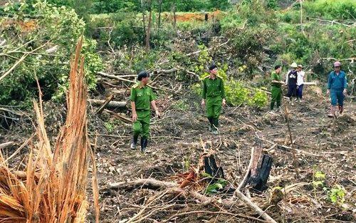 Khẩn trương điều tra, xử lý vụ khai thác rừng trái phép tại Lâm Đồng