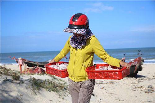 Ngư dân Quảng Trị được mùa cá khoai