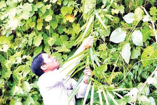 Quảng Trị: Phát triển mô hình giảm nghèo bền vững cho đồng bào dân tộc vùng biên giới