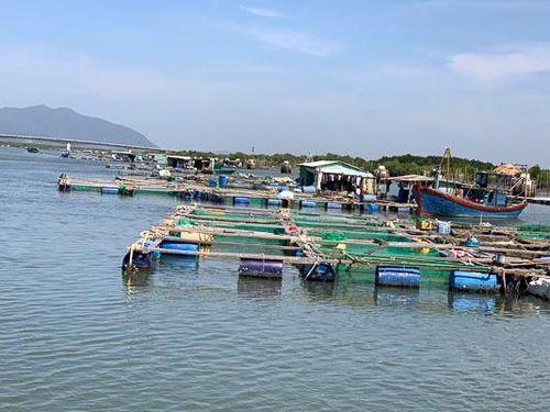 Bè cá lấn chiếm luồng hàng hải sông Dinh