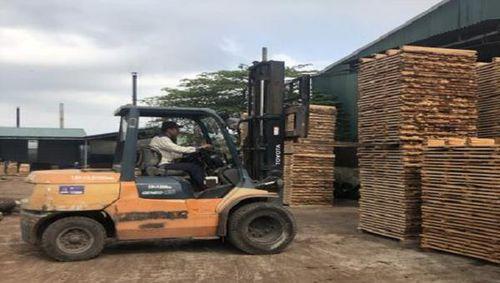 Chặn lỗ hổng kiểm soát nguồn gốc gỗ