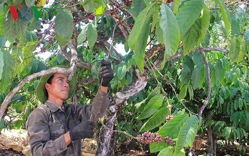 Cà phê Việt Nam kỳ vọng xuất khẩu 6 tỷ USD trong thập kỷ tới