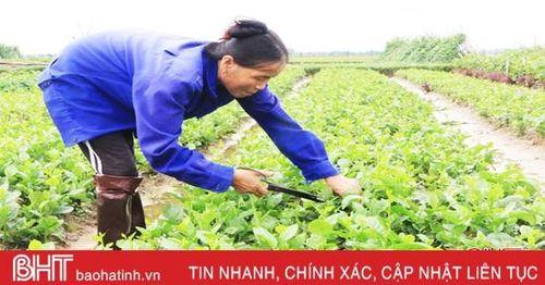 140 ha rau, củ Tượng Sơn 'nói không' với dư lượng thuốc bảo vệ thực vật
