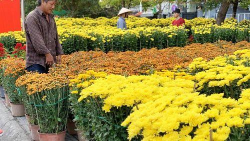 Nhộn nhịp hoa Tết ngoại thành Sài Gòn