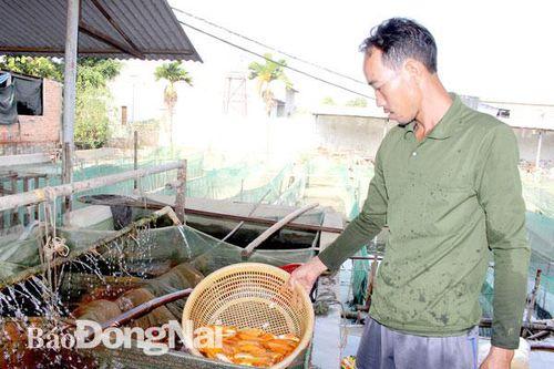 'Thủ phủ' cá giống vùng Đông Nam bộ