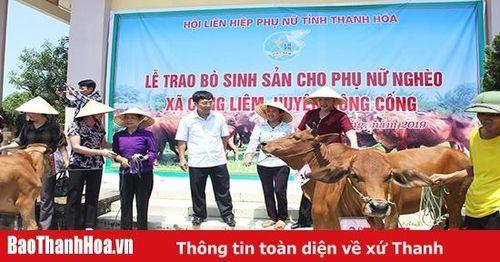 Mang niềm vui đến cho hội viên, phụ nữ tổ hợp tác chăn nuôi bò sinh sản xã Công Liêm