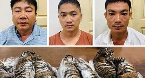 Chủ trang trại và đồng phạm lĩnh 16 năm tù vì buôn bán hổ