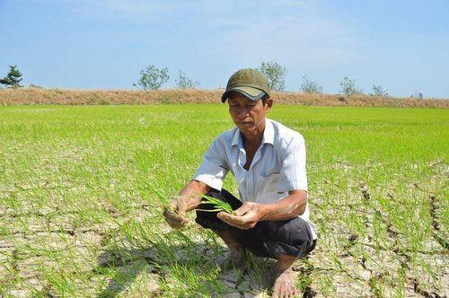Hạn, mặn bủa vây Đồng bằng sông Cửu Long