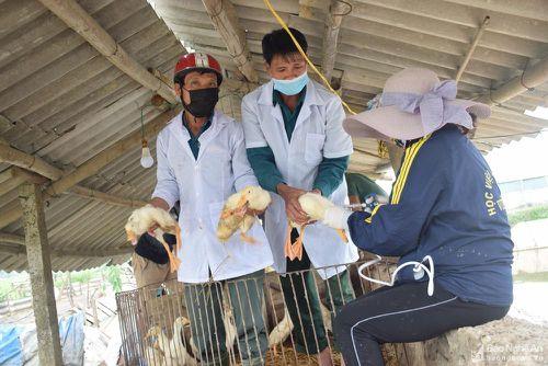 Nghệ An khuyến cáo gia cầm tiêm vắc-xin phòng H5N6 sau 14 ngày mới được giết mổ