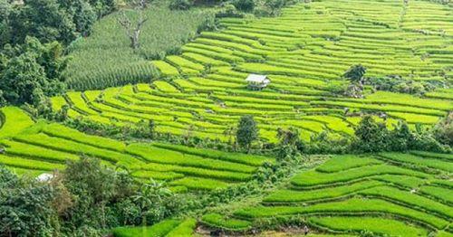 Những lý do bạn nên ghé thăm Chiang Mai