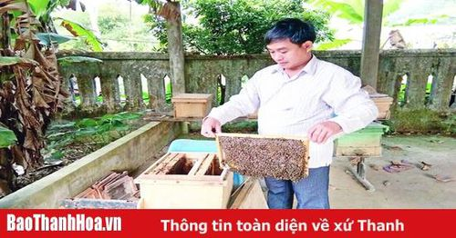 Tìm hướng đi bền vững cho nghề nuôi ong lấy mật