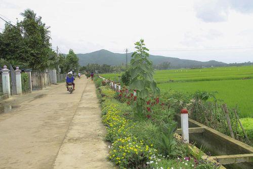 Thảm hoa trên những con đường quê