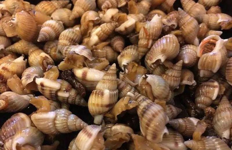 Tử vong vì ăn ốc biển lạ: Nhận diện các loại ốc cực độc, ăn 1-2 con cũng chết