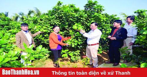Tự hào 80 năm truyền thống vẻ vang của Đảng bộ huyện Hậu Lộc