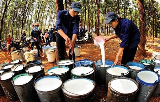 Cao su Phước Hòa sẽ chuyển sang phát triển công nghiệp, kế hoạch lợi nhuận 1.148 tỷ