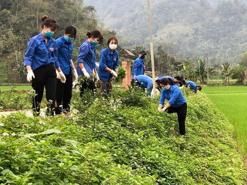 Tuổi trẻ Tuyên Quang thực hiện hàng trăm công trình, phần việc thanh niên