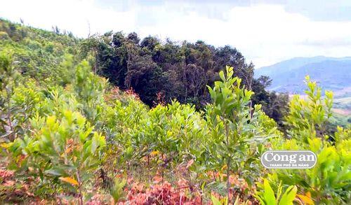 Càng giữ, rừng càng mất (!?)