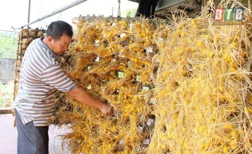 Thái Bình: Làm giàu từ nghề 'ăn cơm đứng'