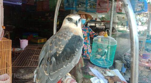 Hành trình giải cứu động vật hoang dã phòng chống COVID-19