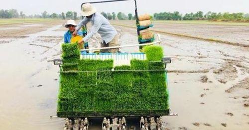 Đẩy mạnh cơ giới hóa sản xuất lúa