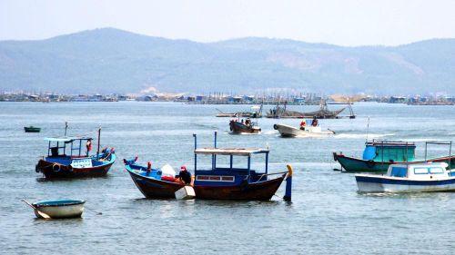 Vịnh Xuân Đài ô nhiễm vì chất thải