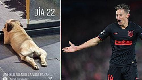 'Kẻ hạ sát' Liverpool lấy tên sân Anfield đặt cho... chó!
