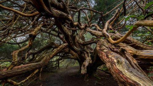 Những kỳ quan thiên nhiên lạ lùng nhất trên Trái đất