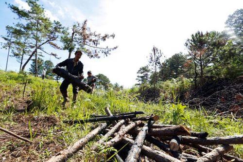 Một phụ nữ bị xử phạt 85 triệu đồng vì phá rừng chiếm đất trái phép