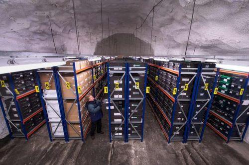Hầm hạt giống Svalbard cán đích 1 triệu mẫu