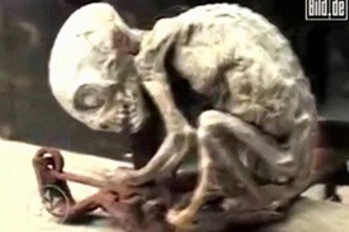 Bí ẩn 'lời nguyền chết chóc' từ sinh vật ngoài hành tinh