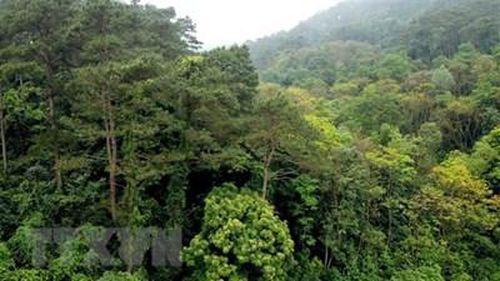 Hai phụ nữ ở Quảng Trị bị lạc trong rừng một ngày, đã về đến nhà an toàn