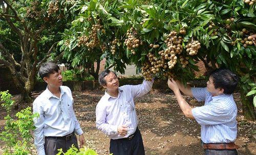 Sở hữu trí tuệ - 'Chắp cánh' đưa nông sản Thủ đô vươn xa