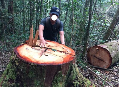 UBND tỉnh Kon Tum thông tin về phóng sự phá rừng của VTV1