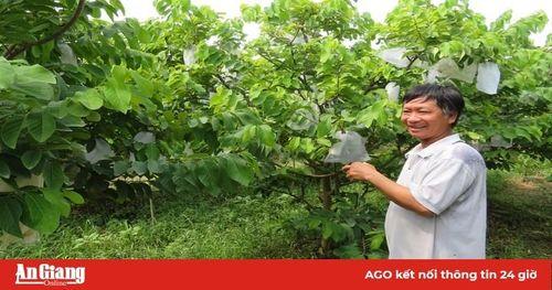 Na Thái - cây trồng mới, hiệu quả cao
