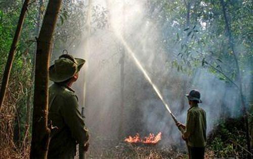 Cà Mau chủ động phòng, chống cháy rừng