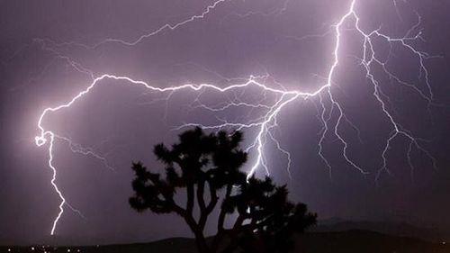 Bình Định: Trú mưa dưới gốc cây lớn, 3 phụ nữ bị sét đánh tử vong thương tâm