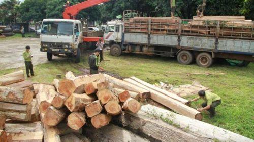 Nhóm đối tượng vận chuyển gỗ lậu 'khủng' ở vùng biên lĩnh án