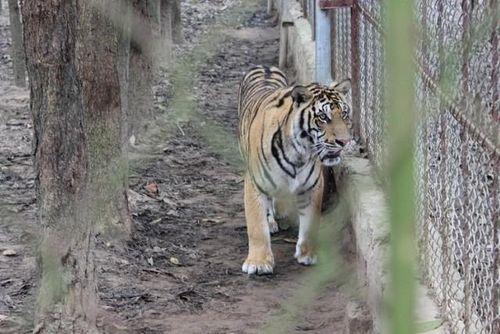 'Hành động 3 không' chung tay bảo vệ động vật hoang dã