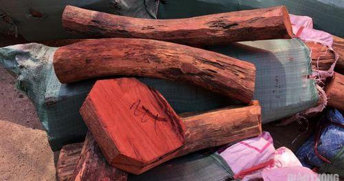 Kiểm tra xe khách, bất ngờ phát hiện gỗ lậu được ngụy trang tinh vi