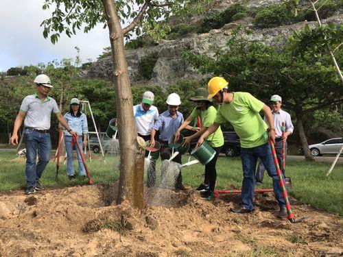 Trồng 15 cây Bao Báp tại Công viên Mũi Nghinh Phong, TP.Vũng Tàu