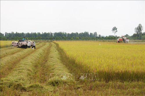 Thị trường nông sản từ 8 - 13/6: Giá lúa ổn định, cà phê đi xuống