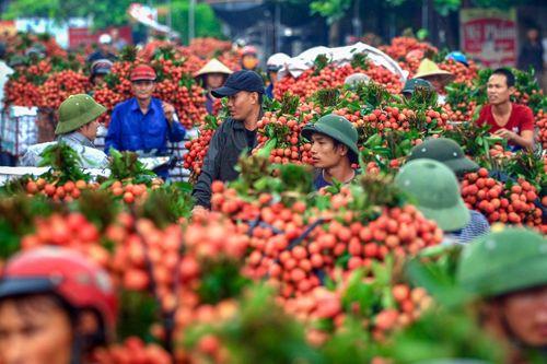 Phiên chợ rực sắc vải đỏ độc nhất Việt Nam